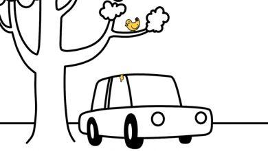 Photo of Mantén la pintura de tu vehículo a salvo de los desechos de pájaro