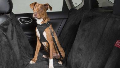 Photo of Nissan muestra vehículos y accesorios ideales para celebrar el Día Mundial del Perro