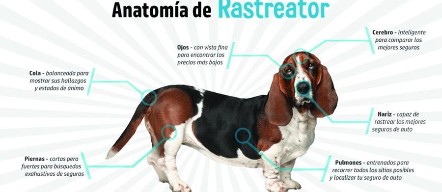 Photo of Va con fuerza Rastreator.mx por el mercado mexicano